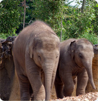 Photo of Elephants at the Zoo